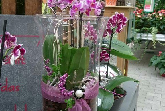 Floristik im Gartencenter Kemper in Hagen a.T.W.