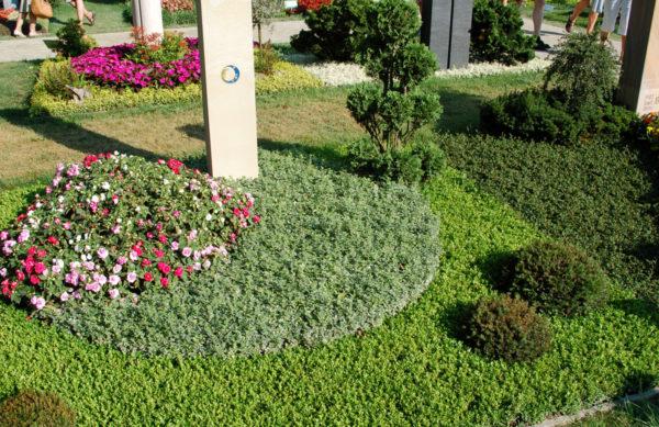 Moderne Grabbepflanzung